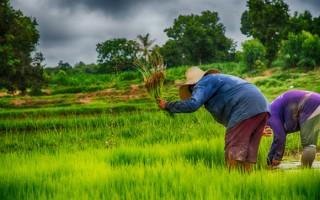 ICT helps farmer sow seeds of hope in rural Thailand