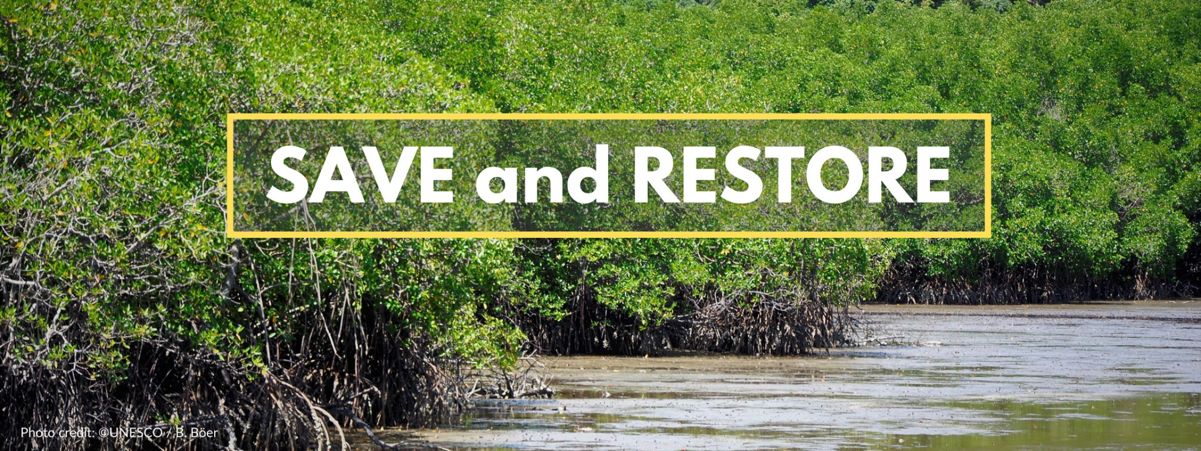 International Day for the Conservation of Mangrove Ecosystems