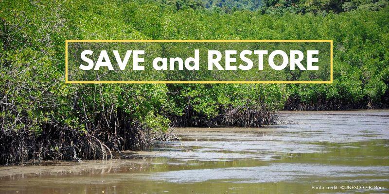 mangrove-protection